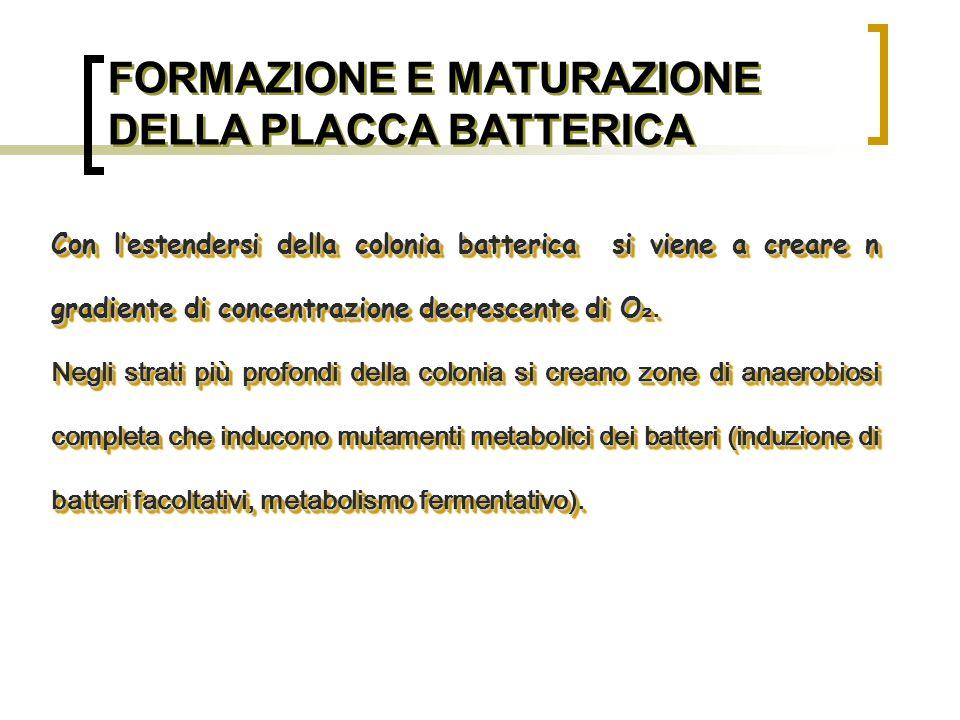 FORMAZIONE E MATURAZIONE DELLA PLACCA BATTERICA