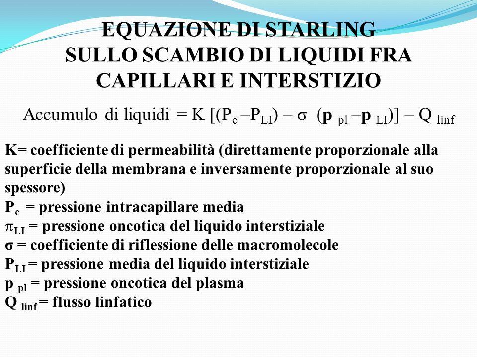 SULLO SCAMBIO DI LIQUIDI FRA CAPILLARI E INTERSTIZIO