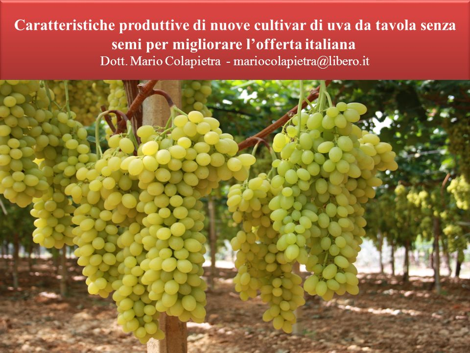 Caratteristiche produttive di nuove cultivar di uva da tavola senza semi per migliorare l'offerta italiana Dott.