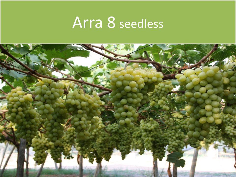 Arra 8 seedless