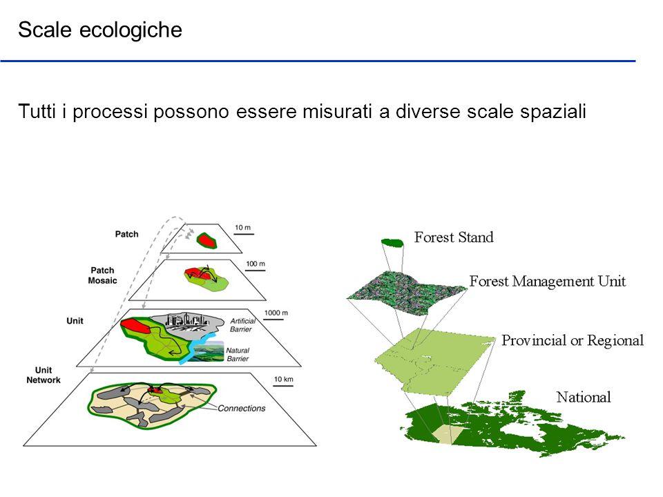 Scale ecologiche Tutti i processi possono essere misurati a diverse scale spaziali