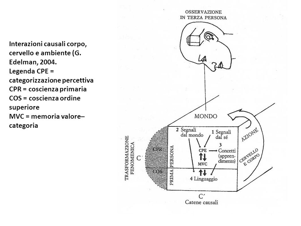 Interazioni causali corpo, cervello e ambiente (G. Edelman, 2004.