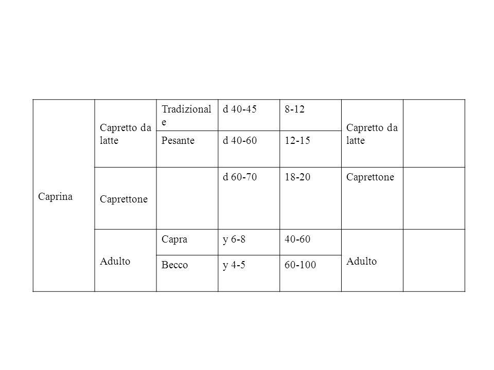 Caprina Capretto da latte. Tradizionale. d 40-45. 8-12. Pesante. d 40-60. 12-15. Caprettone.
