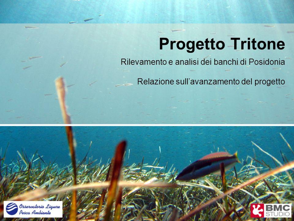 Progetto Tritone Rilevamento e analisi dei banchi di Posidonia
