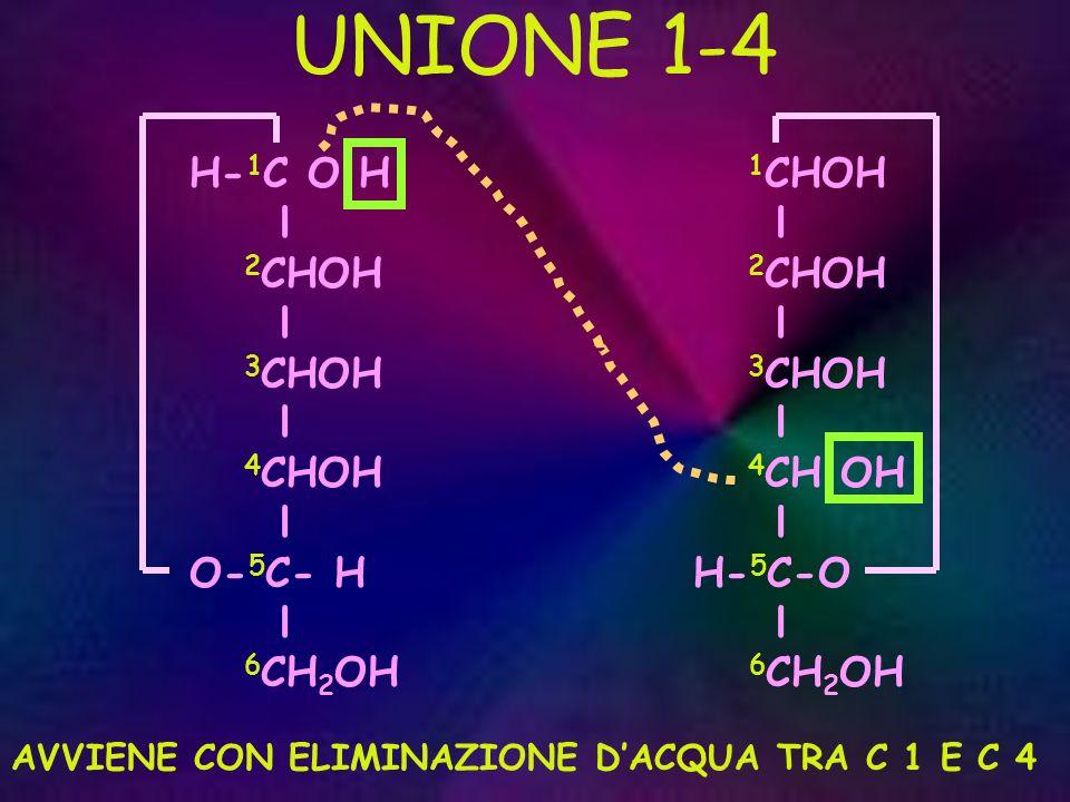 UNIONE 1-4 H-1C O H l 2CHOH 3CHOH 4CHOH O-5C- H 6CH2OH 1CHOH l 2CHOH