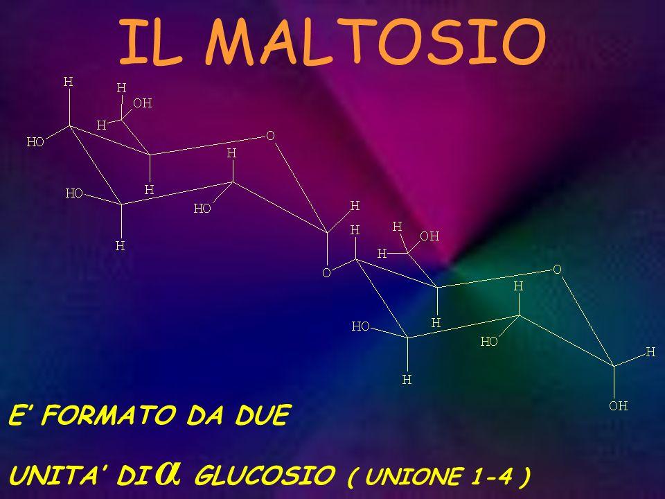IL MALTOSIO E' FORMATO DA DUE UNITA' DI α GLUCOSIO ( UNIONE 1-4 )