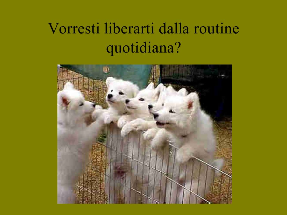 Vorresti liberarti dalla routine quotidiana