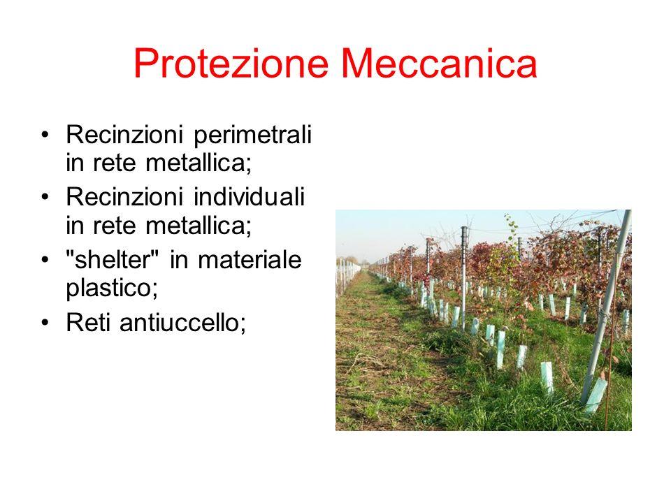 Protezione Meccanica Recinzioni perimetrali in rete metallica;
