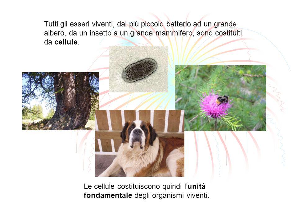 Tutti gli esseri viventi, dal più piccolo batterio ad un grande albero, da un insetto a un grande mammifero, sono costituiti da cellule.