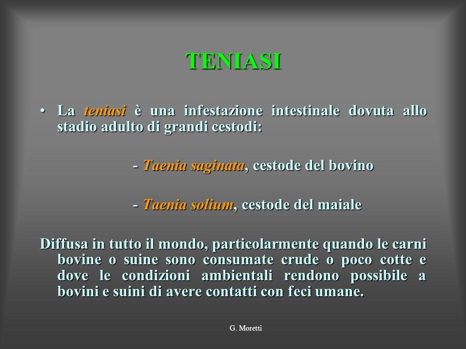 TENIASI La teniasi è una infestazione intestinale dovuta allo stadio adulto di grandi cestodi: - Taenia saginata, cestode del bovino.