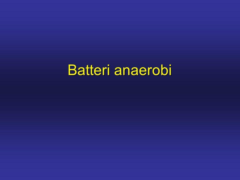 Batteri anaerobi