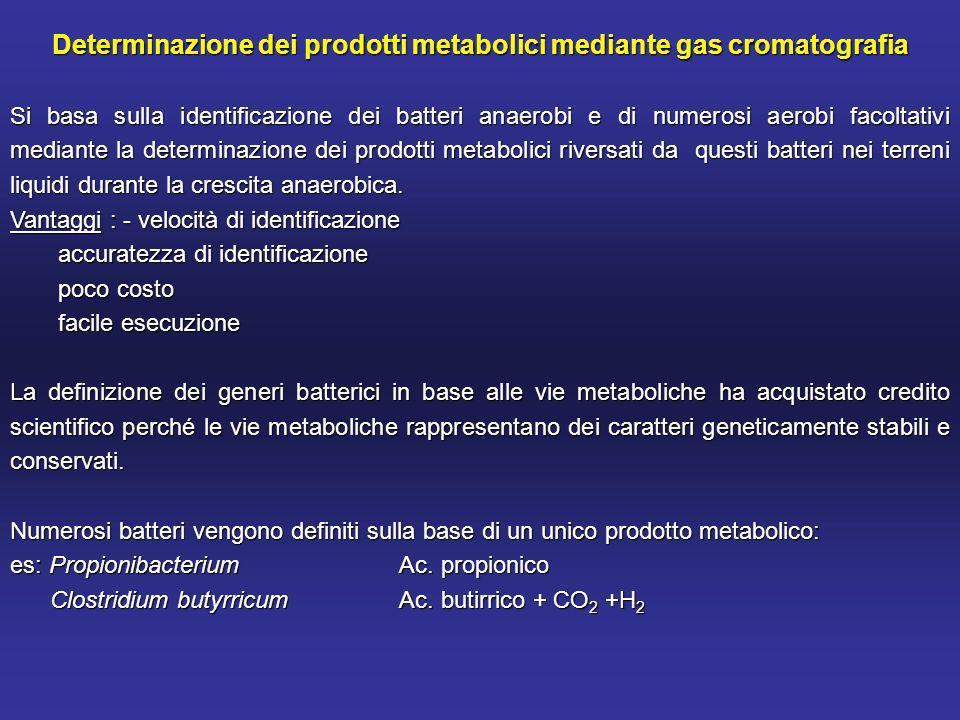 Determinazione dei prodotti metabolici mediante gas cromatografia