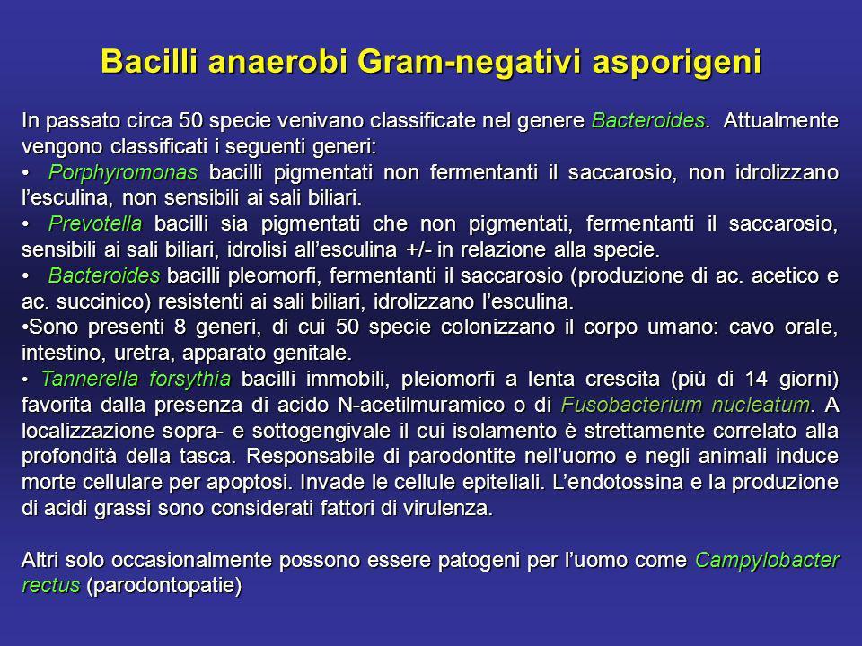 Bacilli anaerobi Gram-negativi asporigeni