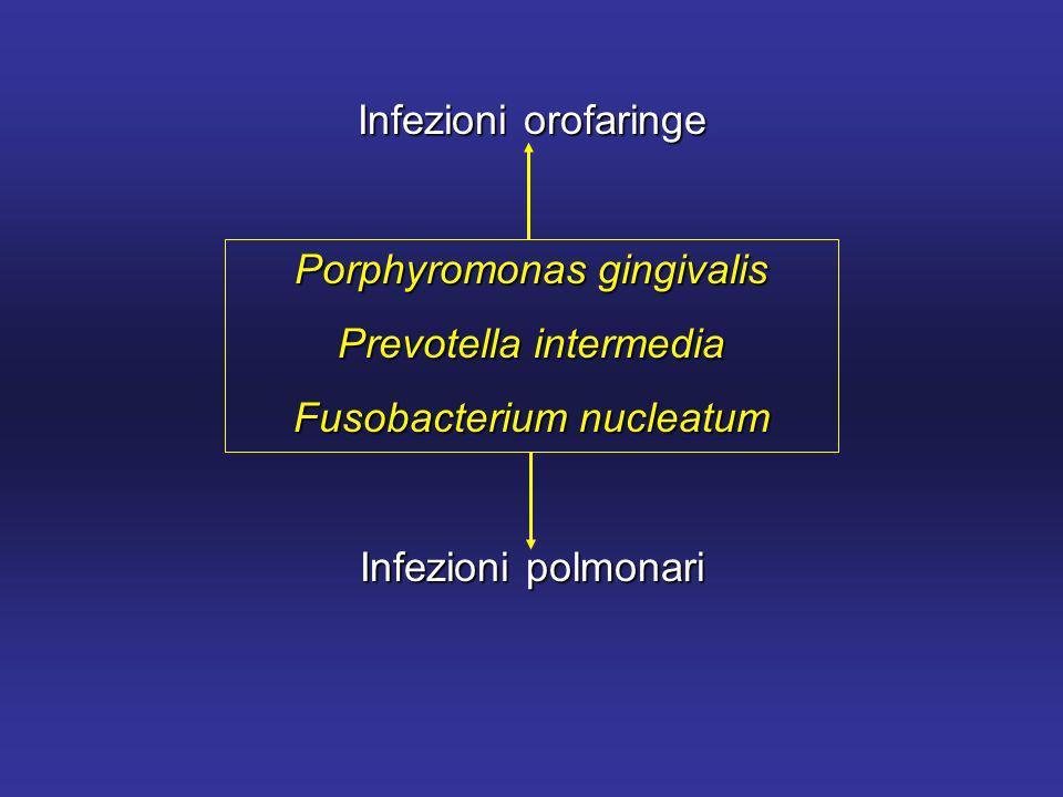 Porphyromonas gingivalis Prevotella intermedia Fusobacterium nucleatum