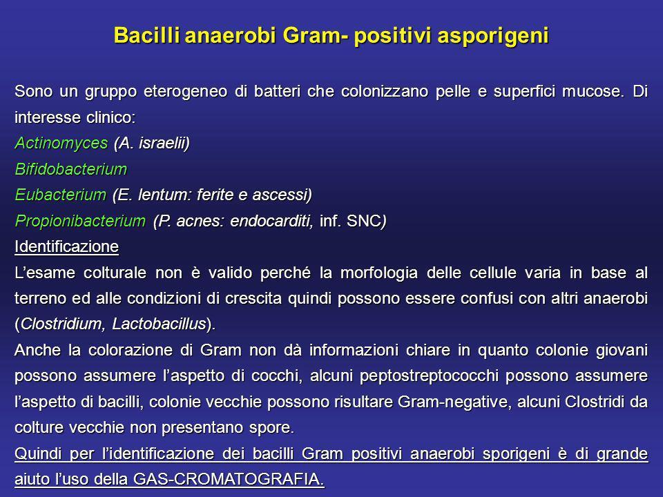 Bacilli anaerobi Gram- positivi asporigeni