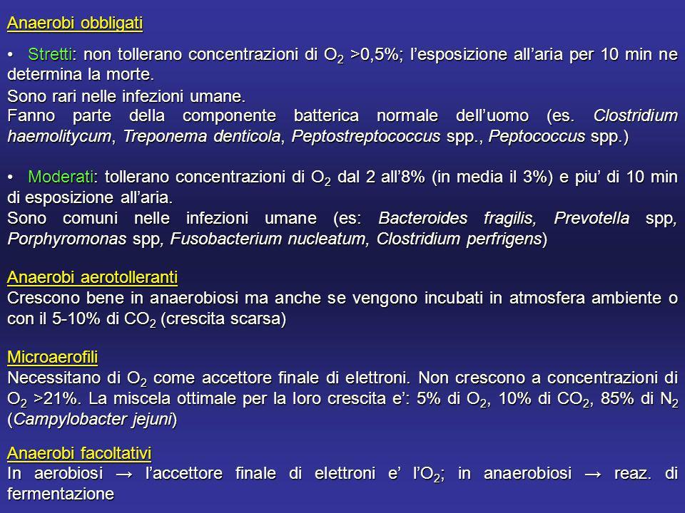 Anaerobi obbligati Stretti: non tollerano concentrazioni di O2 >0,5%; l'esposizione all'aria per 10 min ne determina la morte.