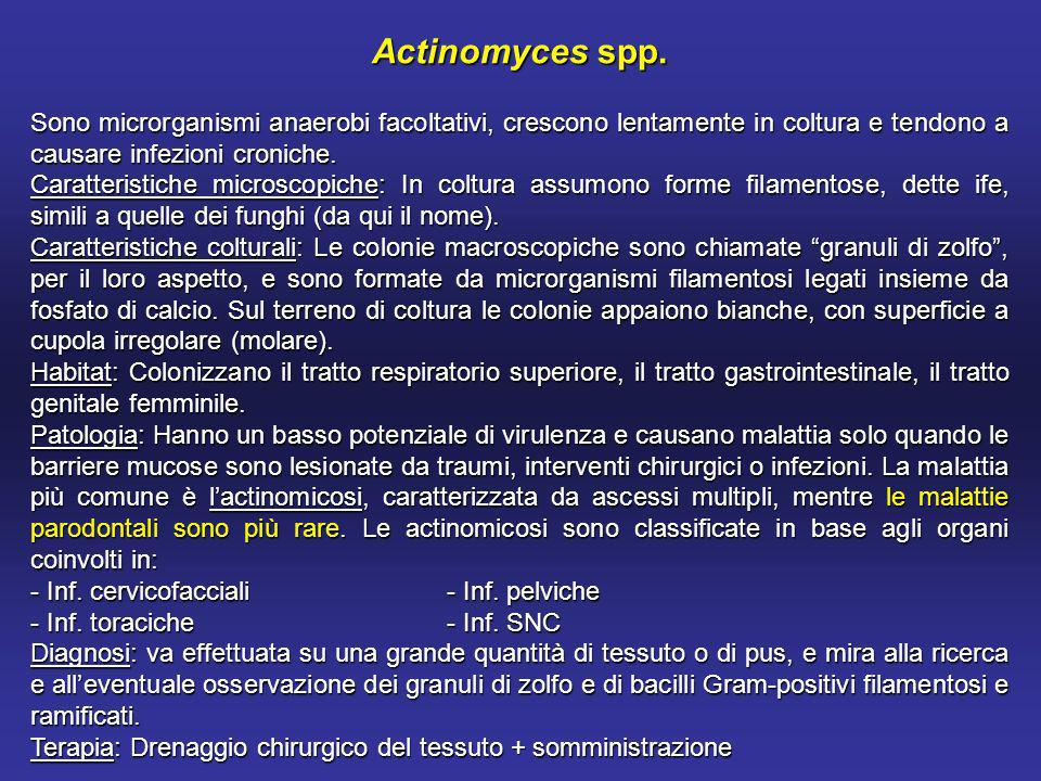 Actinomyces spp. Sono microrganismi anaerobi facoltativi, crescono lentamente in coltura e tendono a causare infezioni croniche.