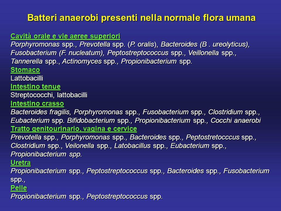 Batteri anaerobi presenti nella normale flora umana