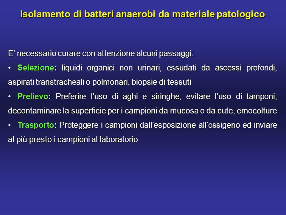 Isolamento di batteri anaerobi da materiale patologico