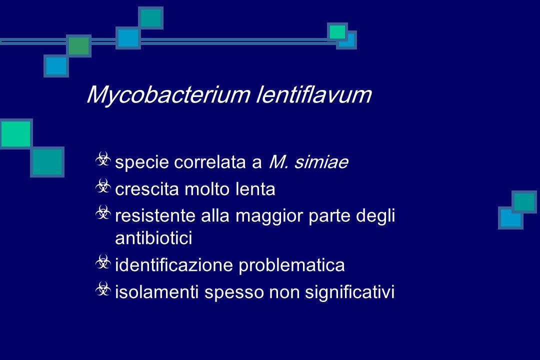 Mycobacterium lentiflavum