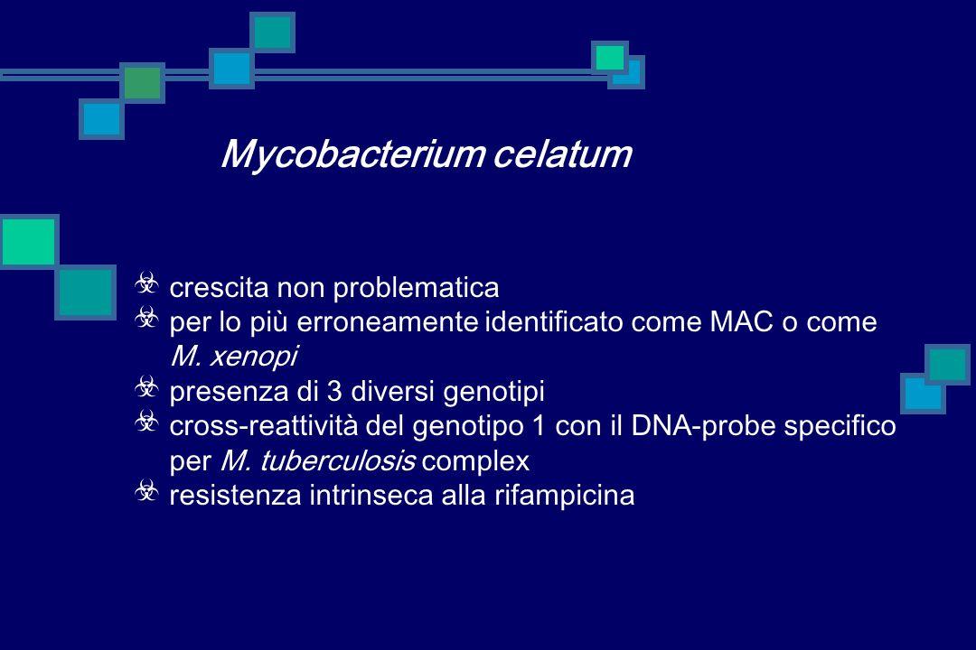 Mycobacterium celatum