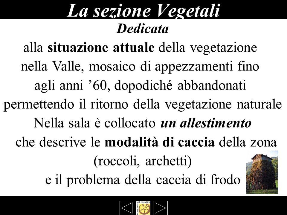 La sezione Vegetali Dedicata alla situazione attuale della vegetazione