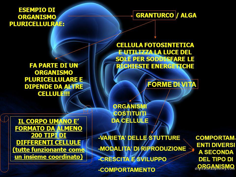 FORME DI VITA ESEMPIO DI ORGANISMO PLURICELLULRAE: GRANTURCO / ALGA