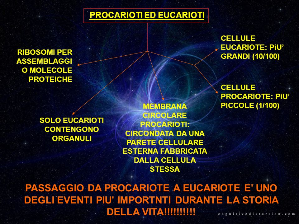 PROCARIOTI ED EUCARIOTI SOLO EUCARIOTI CONTENGONO ORGANULI