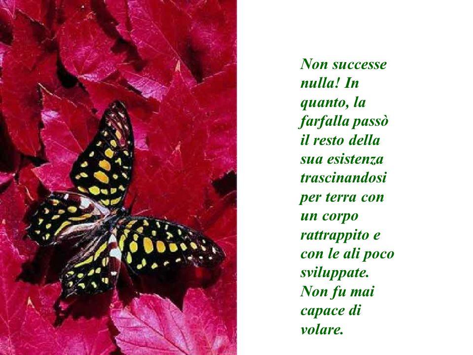 Non successe nulla! In quanto, la farfalla passò il resto della sua esistenza trascinandosi per terra con un corpo rattrappito e con le ali poco sviluppate.