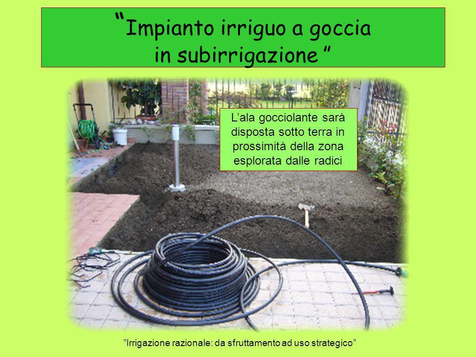 Impianto irriguo a goccia in subirrigazione