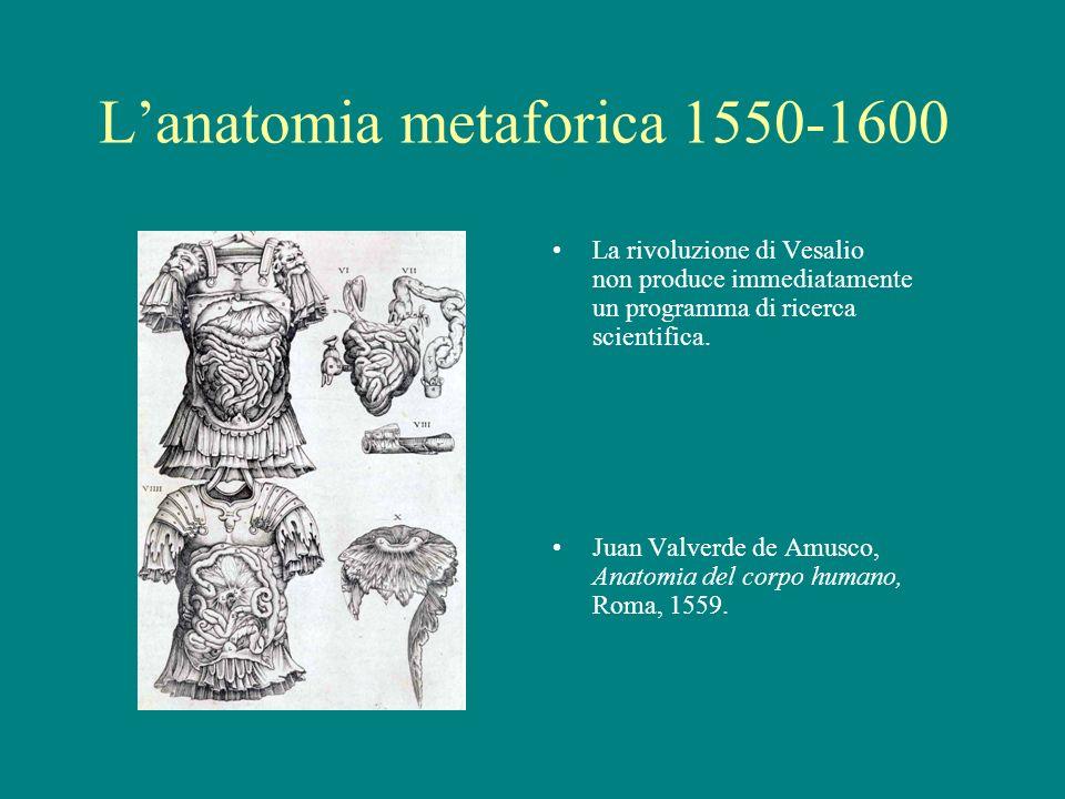 L'anatomia metaforica 1550-1600