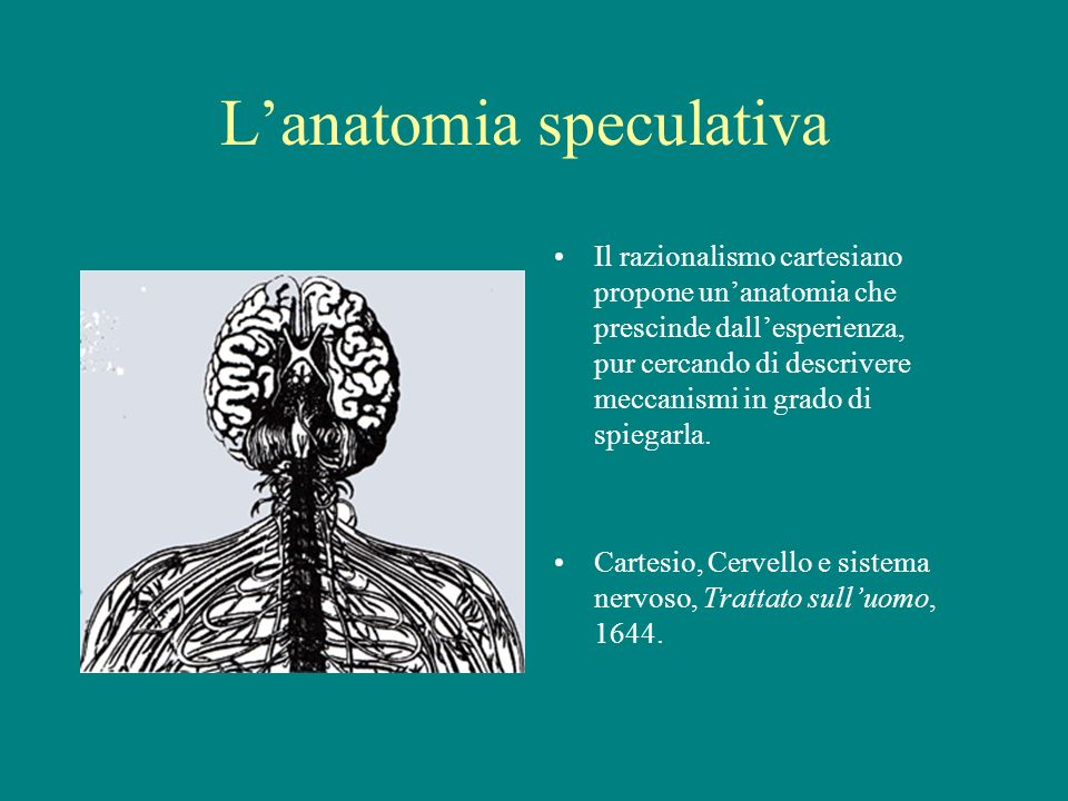 L'anatomia speculativa