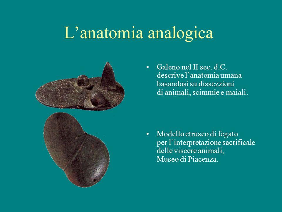 L'anatomia analogica Galeno nel II sec. d.C. descrive l'anatomia umana basandosi su dissezzioni di animali, scimmie e maiali.