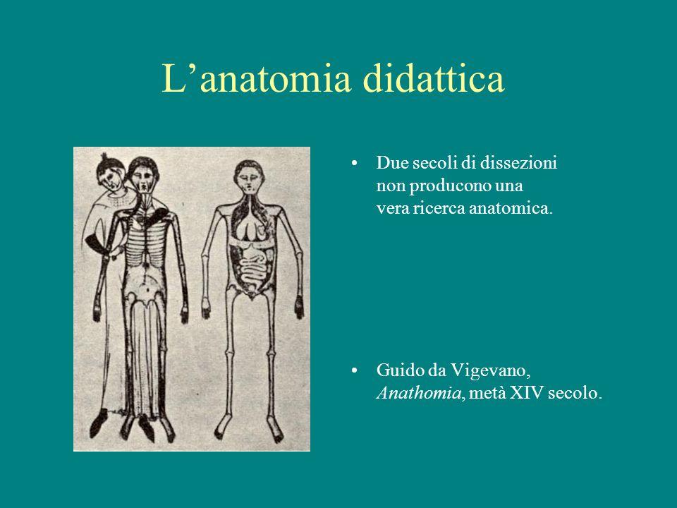 L'anatomia didattica Due secoli di dissezioni non producono una vera ricerca anatomica.