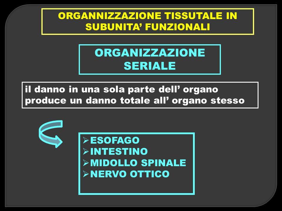 ORGANNIZZAZIONE TISSUTALE IN SUBUNITA' FUNZIONALI