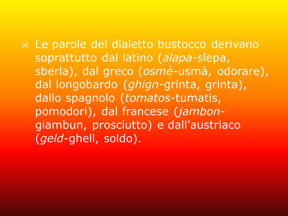 Le parole del dialetto bustocco derivano soprattutto dal latino (alapa-slepa, sberla), dal greco (osmè-usmà, odorare), dal longobardo (ghign-grinta, grinta), dallo spagnolo (tomatos-tumatis, pomodori), dal francese (jambon-giambun, prosciutto) e dall'austriaco (geld-ghell, soldo).