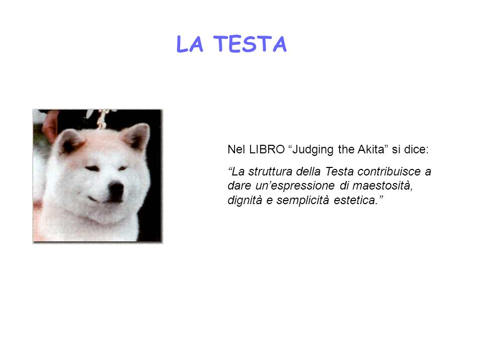 LA TESTA Nel LIBRO Judging the Akita si dice: