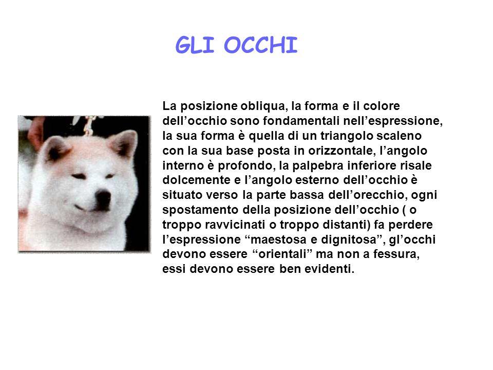 GLI OCCHI