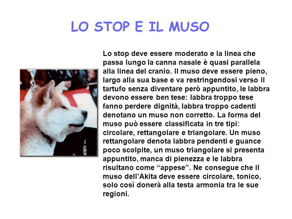 LO STOP E IL MUSO