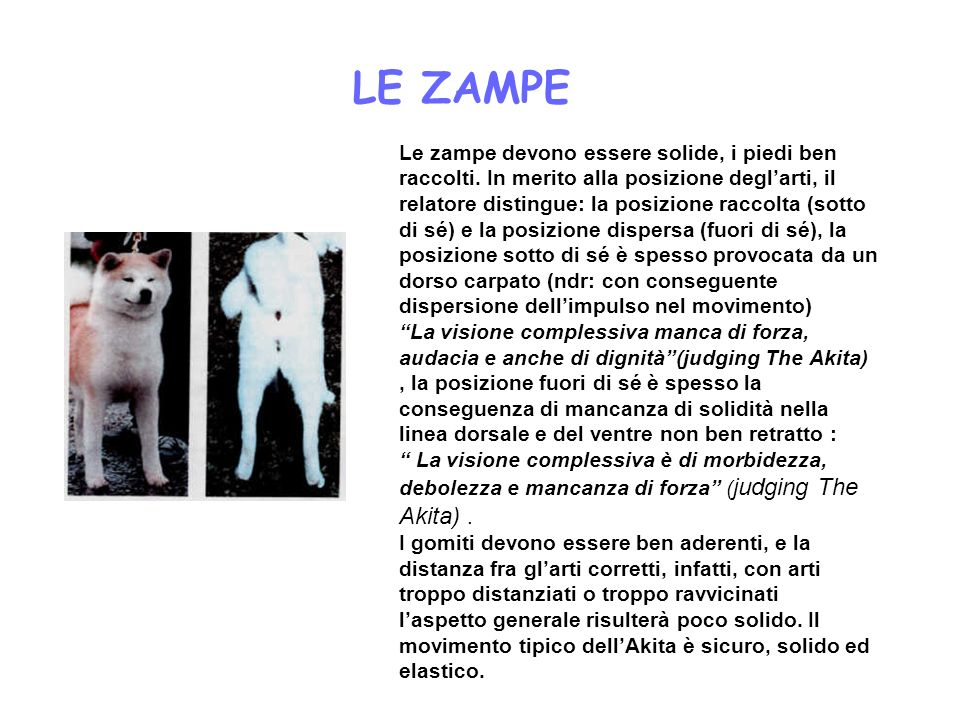 LE ZAMPE