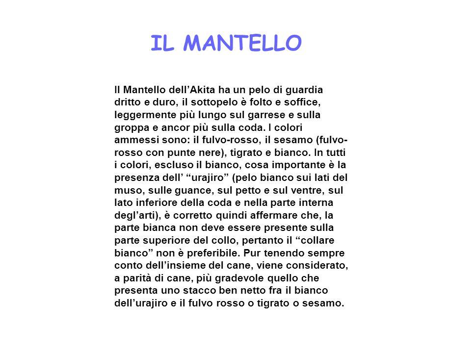 IL MANTELLO