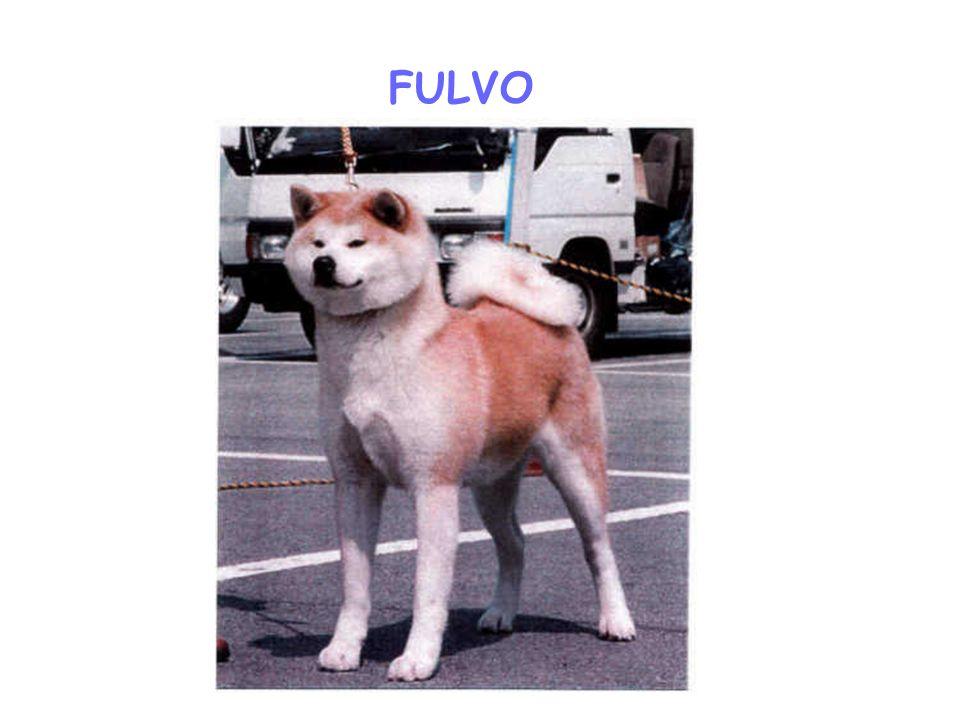 FULVO