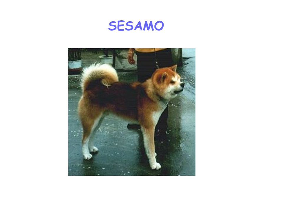 SESAMO