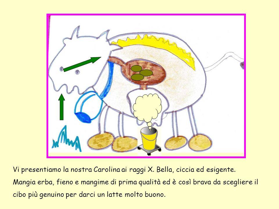 Vi presentiamo la nostra Carolina ai raggi X. Bella, ciccia ed esigente.