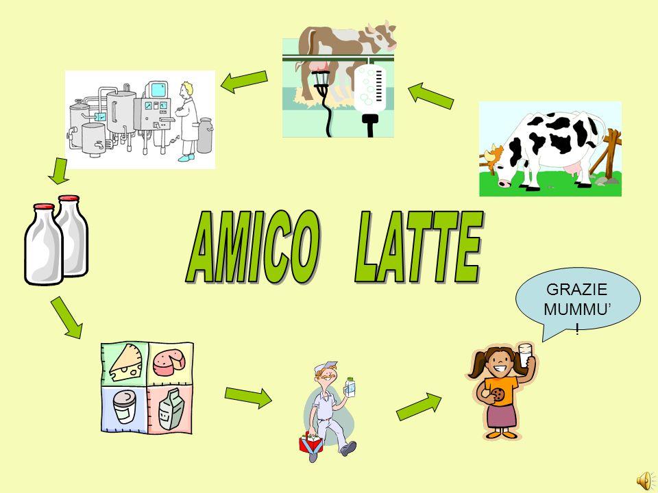 AMICO LATTE GRAZIE MUMMU' !