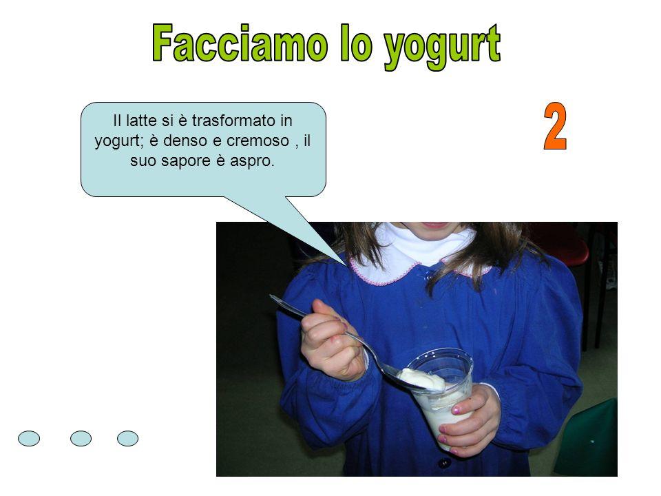 Facciamo lo yogurt Il latte si è trasformato in yogurt; è denso e cremoso , il suo sapore è aspro.