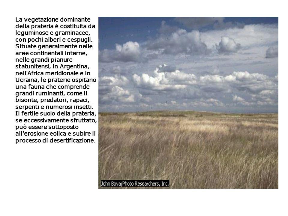 La vegetazione dominante della prateria è costituita da leguminose e graminacee, con pochi alberi e cespugli.