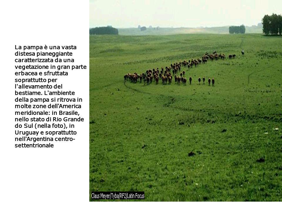 La pampa è una vasta distesa pianeggiante caratterizzata da una vegetazione in gran parte erbacea e sfruttata soprattutto per l allevamento del bestiame.