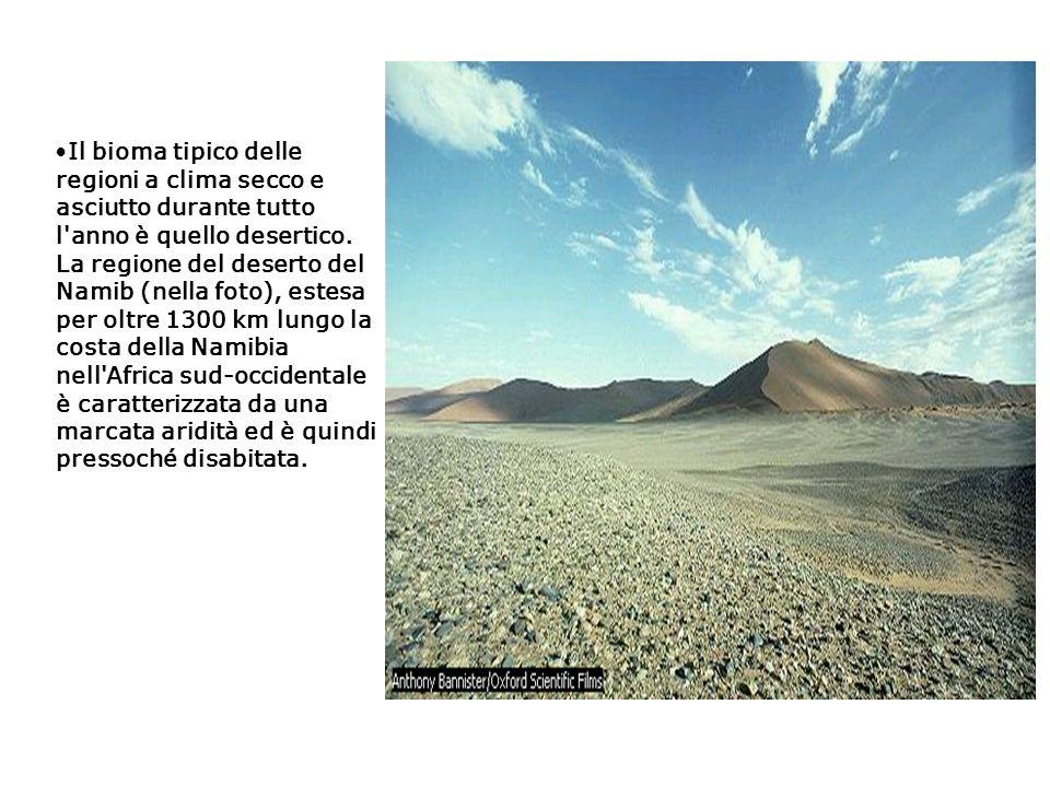 Il bioma tipico delle regioni a clima secco e asciutto durante tutto l anno è quello desertico.