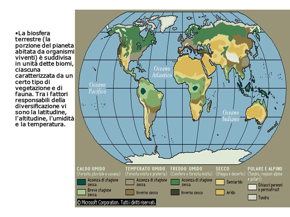 La biosfera terrestre (la porzione del pianeta abitata da organismi viventi) è suddivisa in unità dette biomi, ciascuna caratterizzata da un certo tipo di vegetazione e di fauna.